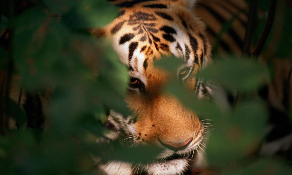 Tiger Card Making Workshop